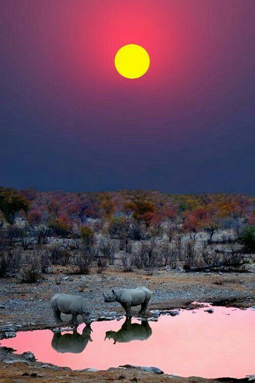 Sunset with Rhinos. Etosha national park