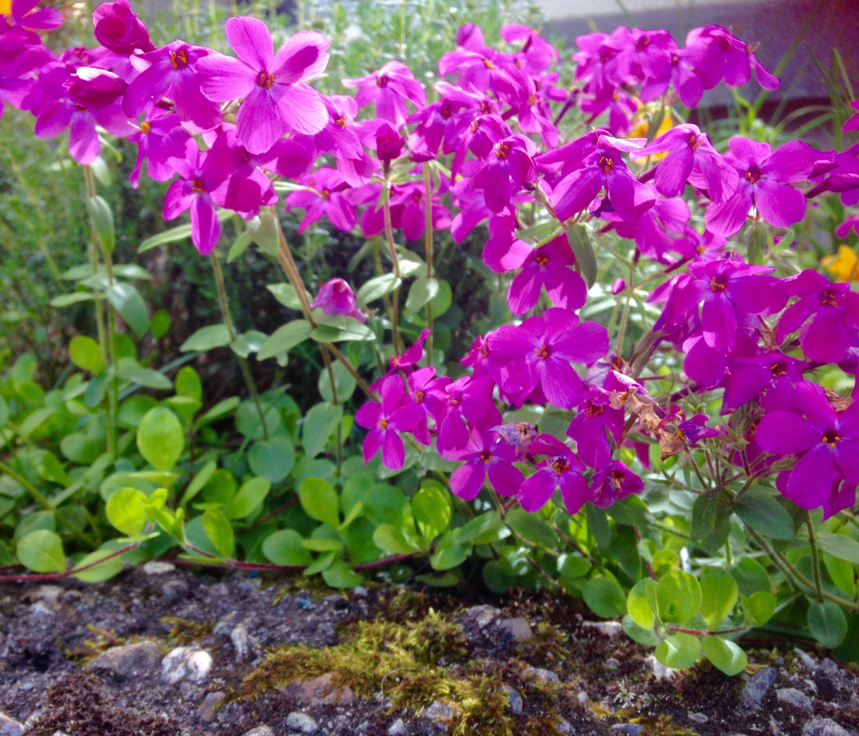 29ff65ac9a1a87f7d7b88abe0743cedf Luxe De Fleurs De Jardin Des Idées