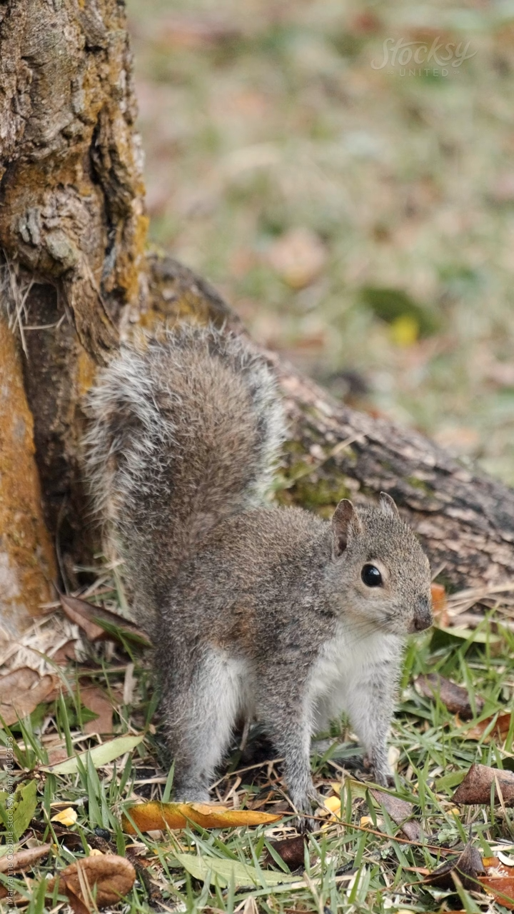 Photo of Squirrel Vertical Video