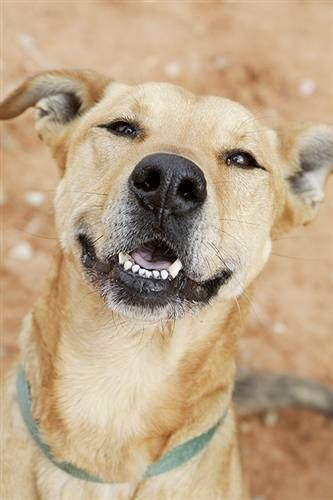 All Adoptable Animals Dog Adoption Animal Sanctuary Animals