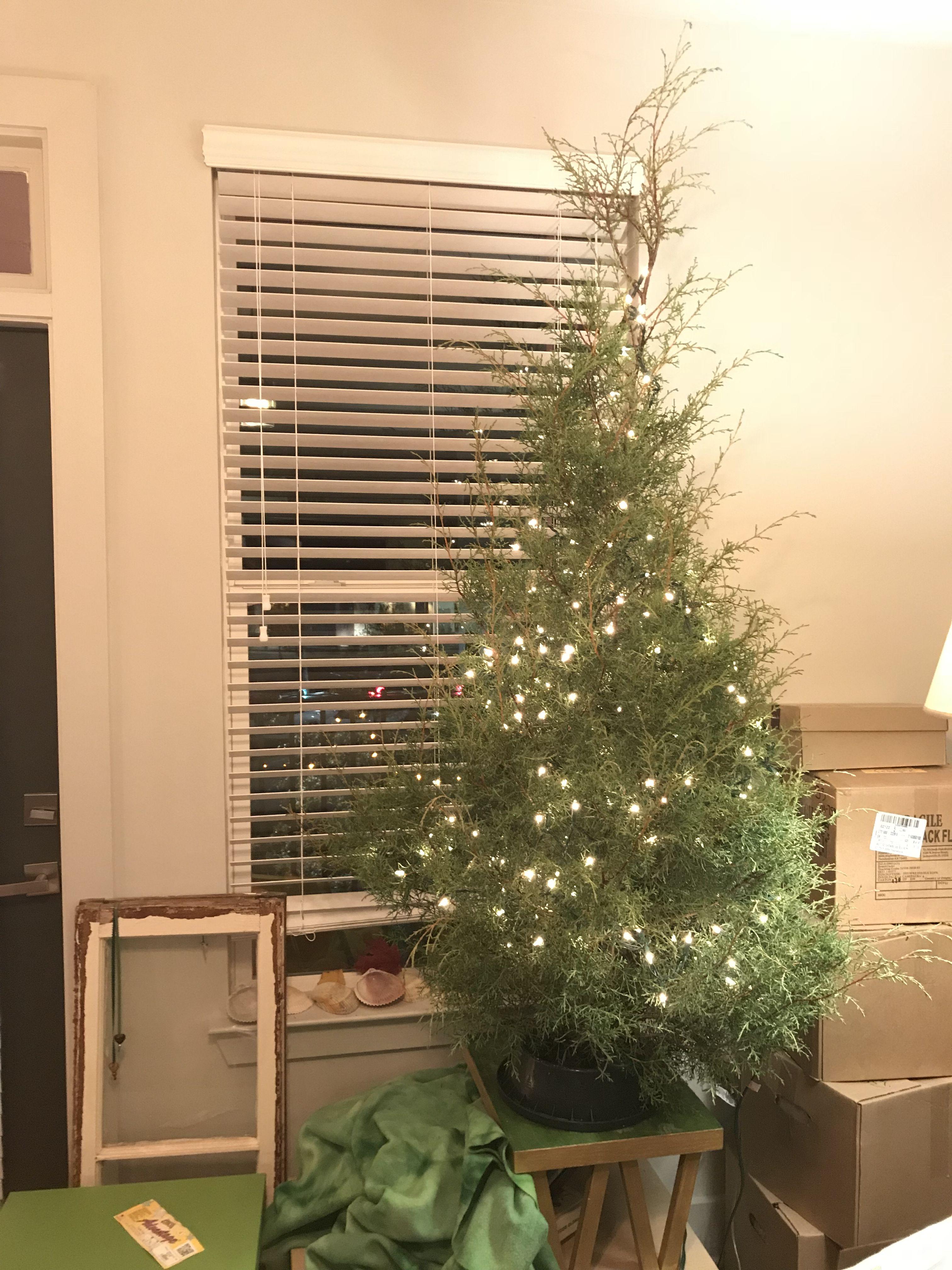 Pin by Rachel Oakley on Homemade Christmas Decor
