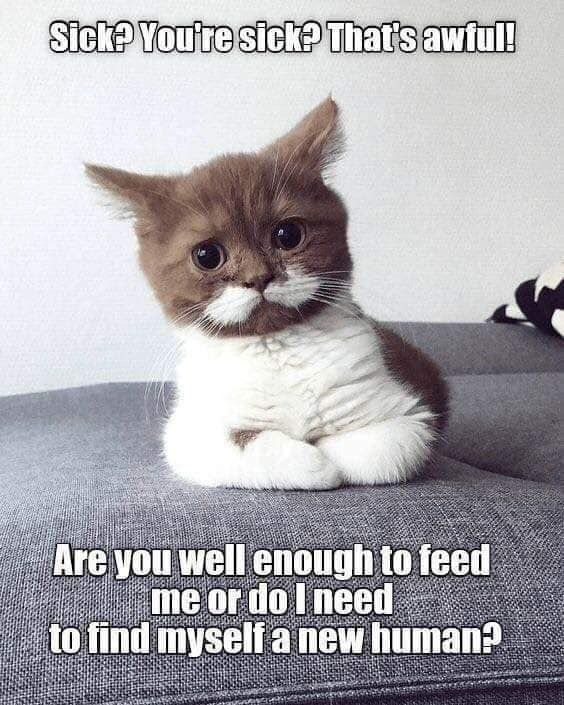 Pin by Misty Santos on Suddenly...CATS Kittens funny