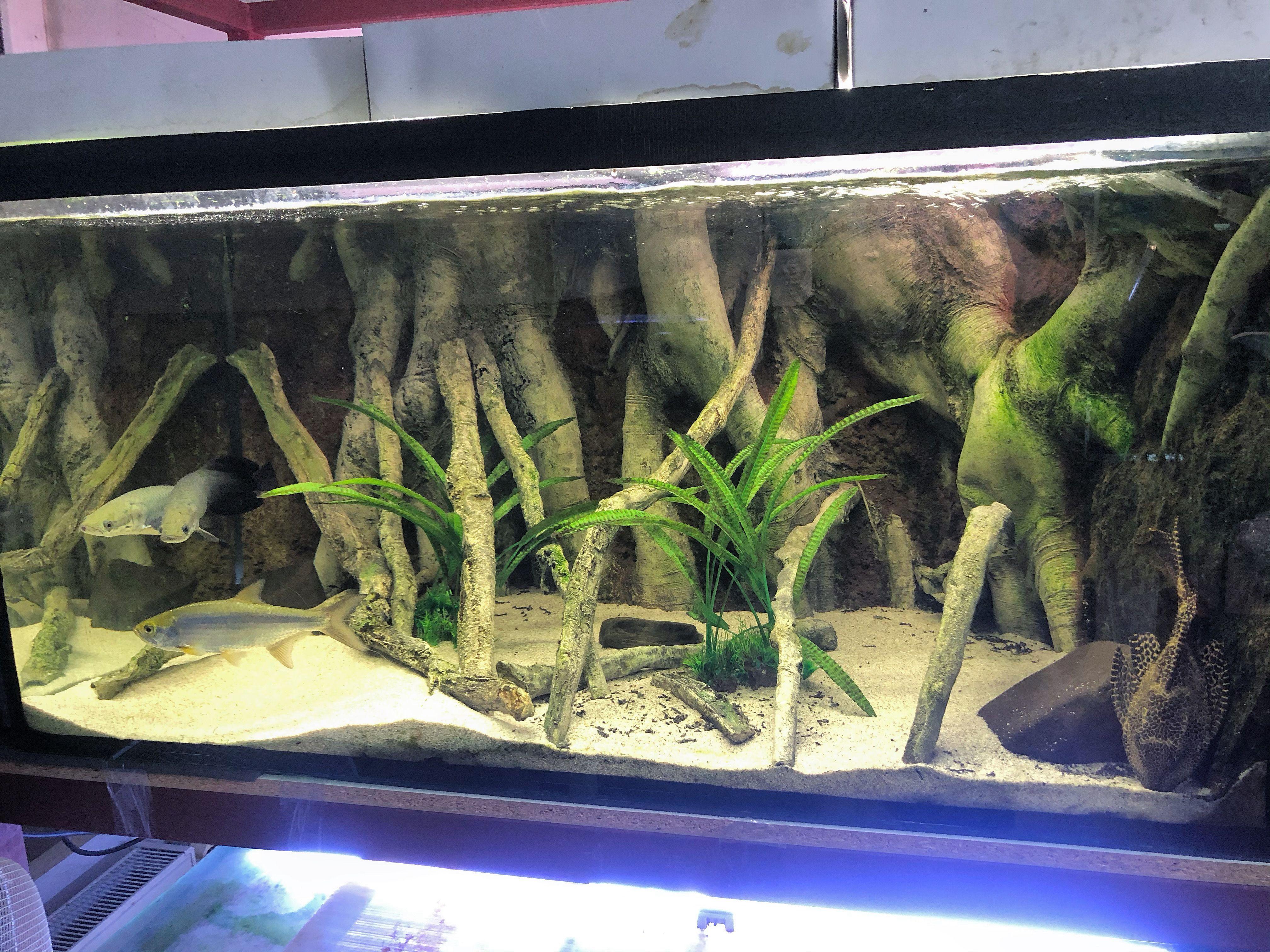 Aquadecor E Models For Central And South American Cichlid Fish Species Aquadecor Cichlid Fish Fish Tank Aquarium Backgrounds