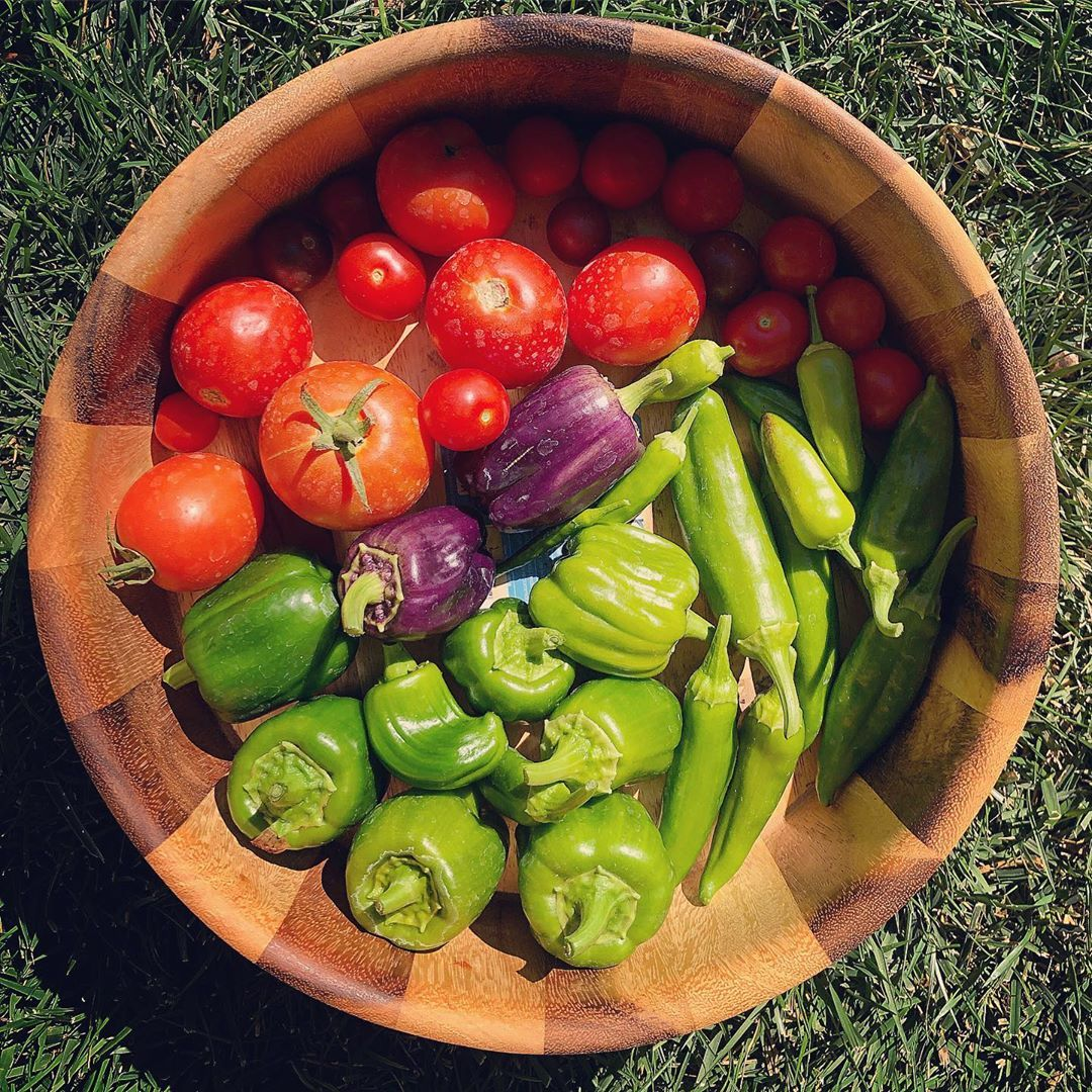 Todays harvest purple bell peppers homegrownwithlove