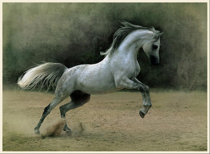 Stunning Horse Photography by Wojtek Kwiatkowski. Please also visit www.JustForYouPropheticArt.com for colorful, inspirational art and stories. Thank you so much, blessings!