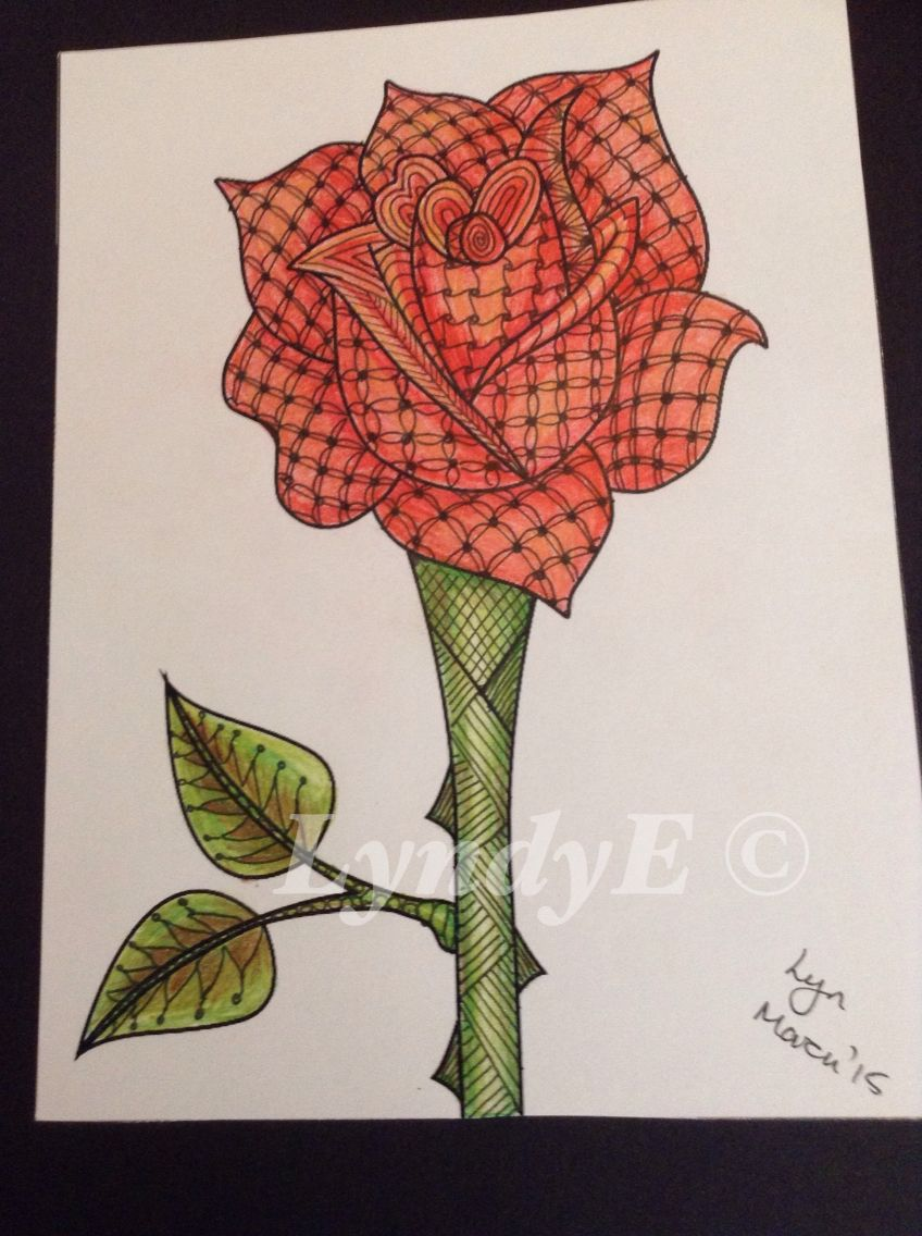 My tangled rose coloured with spectrum noir pencils