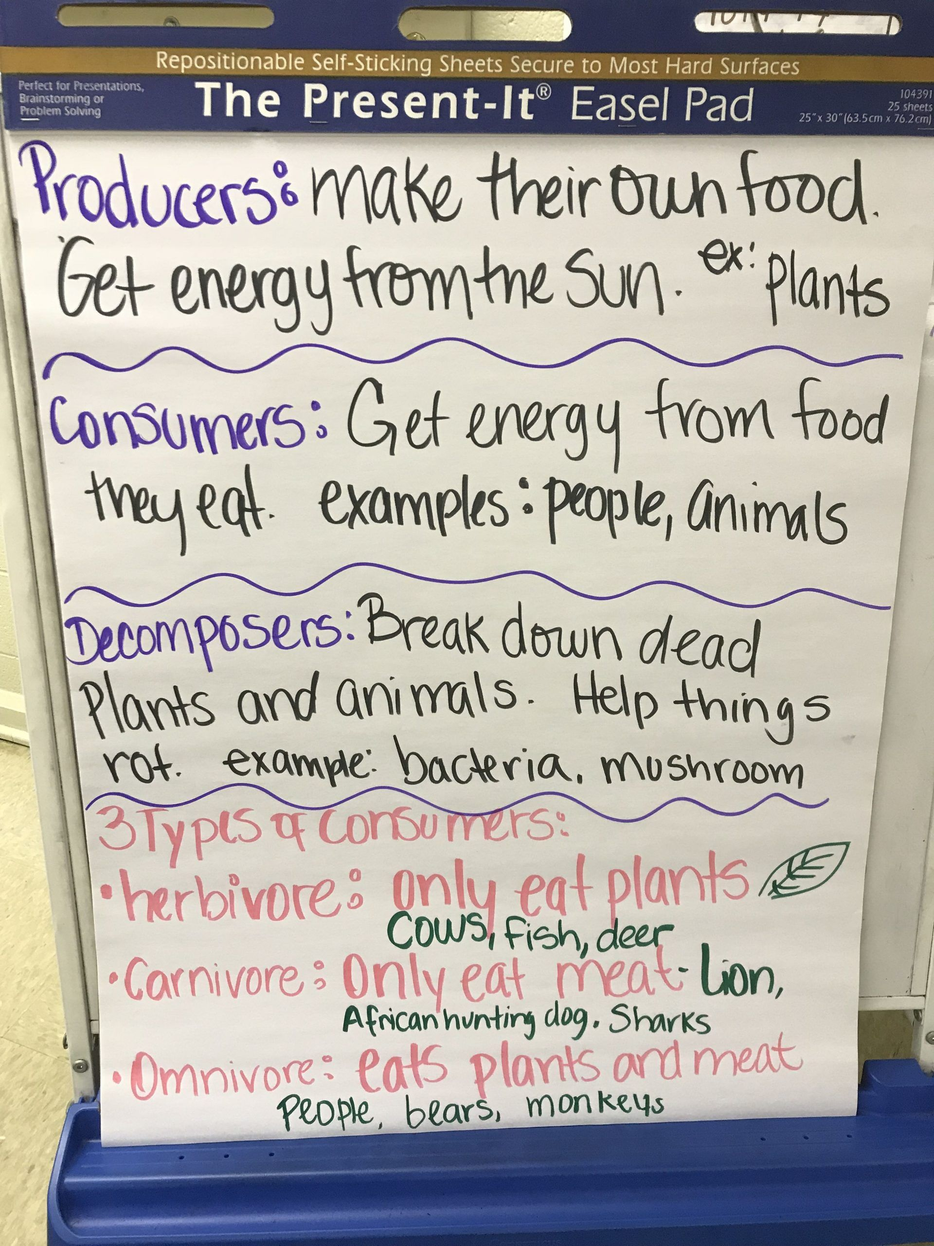 Producers And Consumers Worksheet 3rd Grade Science Chart
