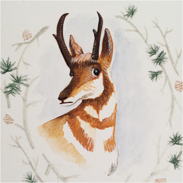 Thanksgiving/Wyoming Antelope - Gouache and Prisma Color