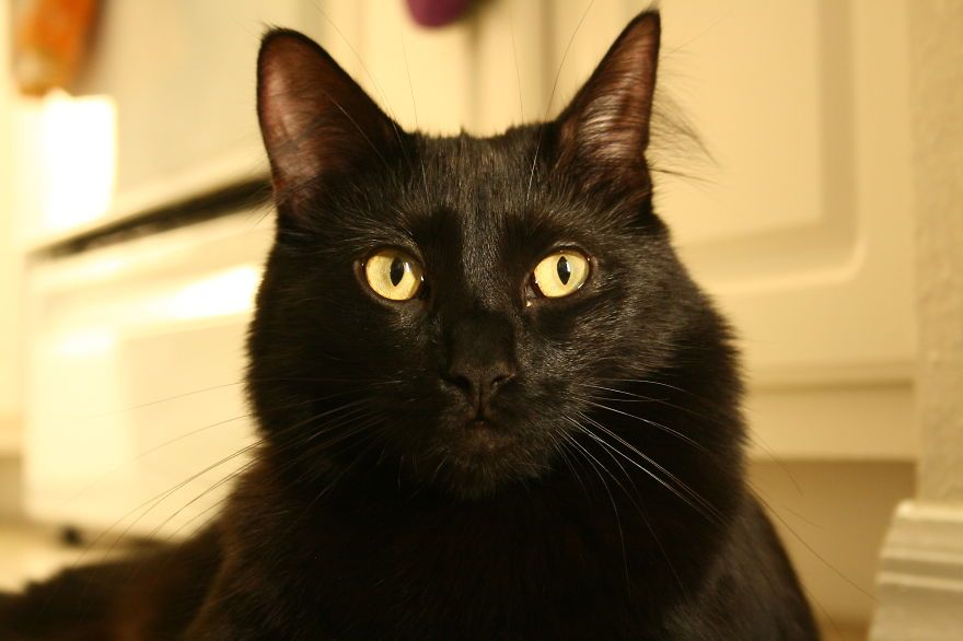 Meet Cole And Marmalade Two Rescued Kitties That Became The Best Of Friends National Black Cat Day Black Cat Day Cats