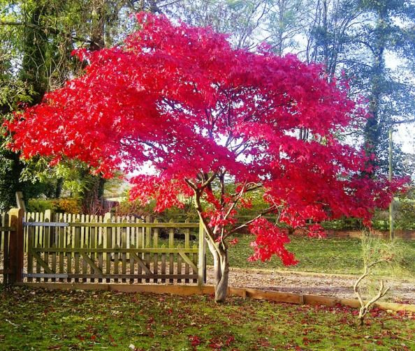 Garden Trees Suitable For A Small Best