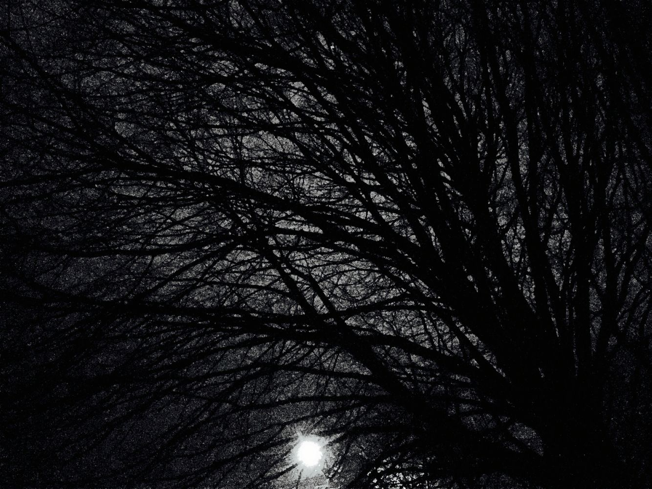 Night and trees