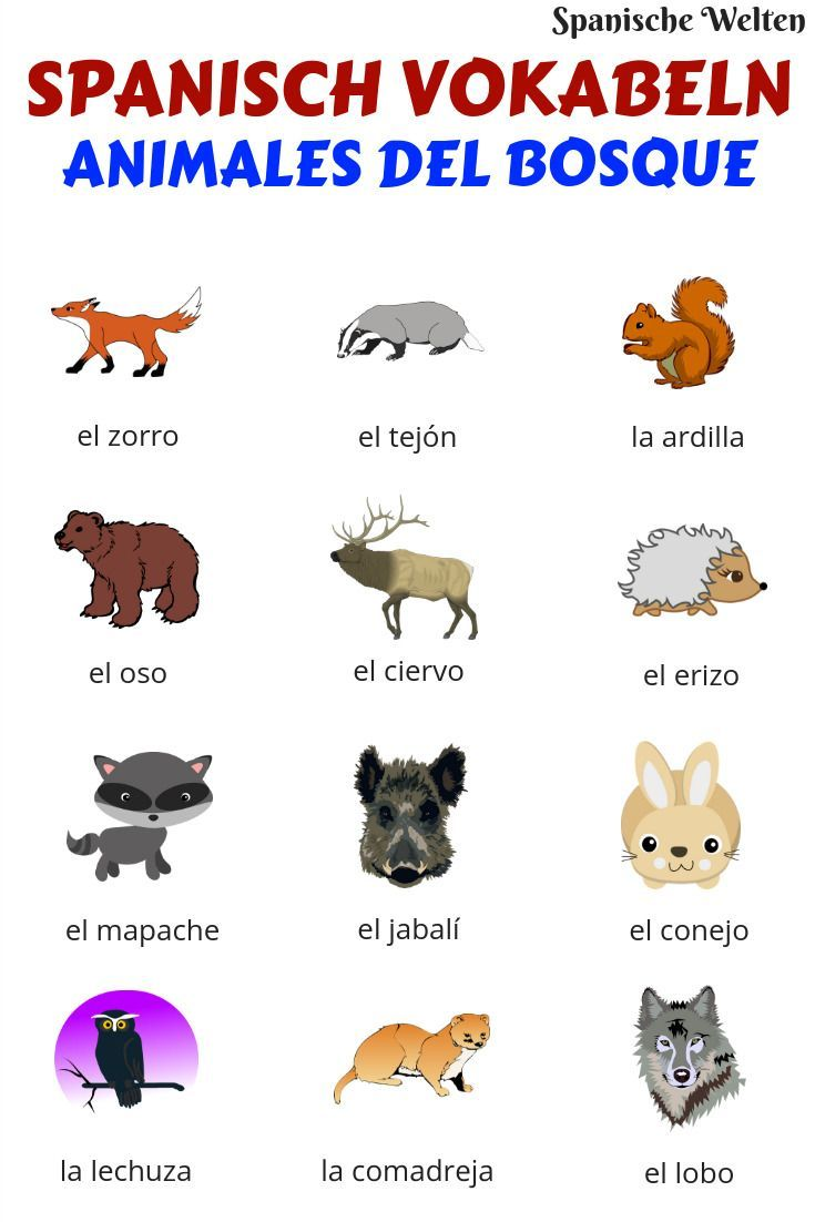 Spanisch Vokabeln Tiere im Wald im Spanisch teaching
