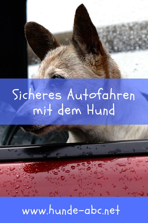 Sicheres Autofahren Mit Dem Hund Allgemeine Infos Mit Bildern