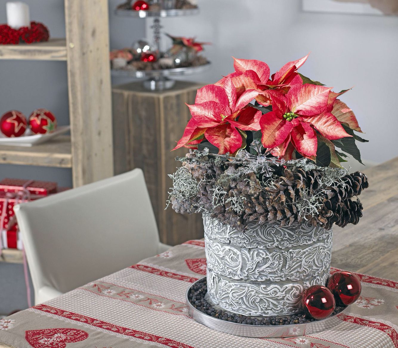 Its Poinsettia Time Here Are Some Tips To Keep Them Looking