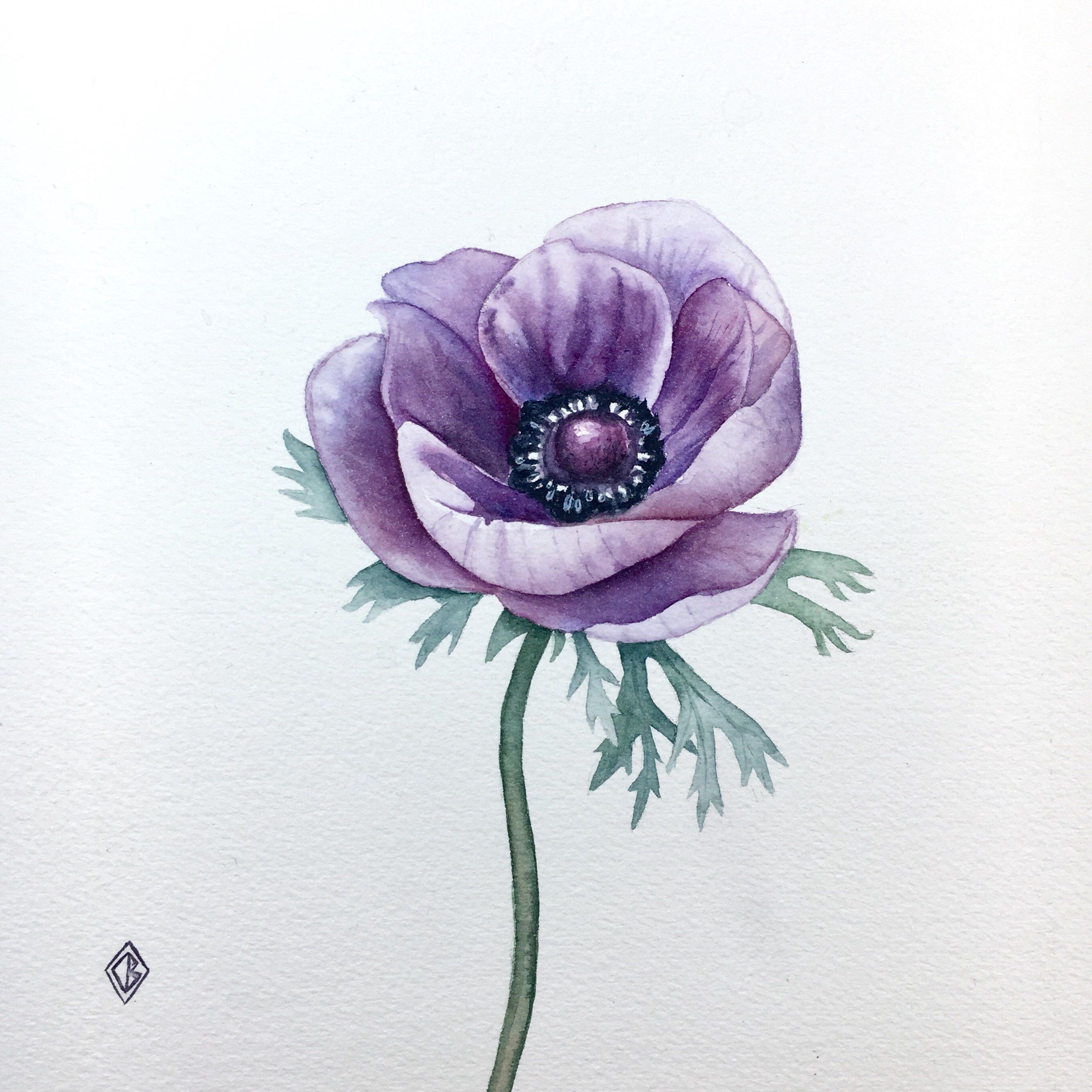 Original Purple Anemone Flower Painting Watercolor Artwork Etsy Purple Flower Tattoos Watercolor Tattoo Flower Anemone Flower