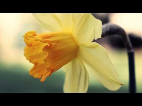 Abraham Hicks - Long Beach CA 2015-02-14 Session 1 - YouTube