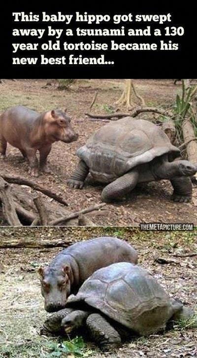 baby hippo and tortoise #babyhippo baby hippo and tortoise #babyhippo baby hippo and tortoise #babyhippo baby hippo and tortoise #babyhippo baby hippo and tortoise #babyhippo baby hippo and tortoise #babyhippo baby hippo and tortoise #babyhippo baby hippo and tortoise #babyhippo baby hippo and tortoise #babyhippo baby hippo and tortoise #babyhippo baby hippo and tortoise #babyhippo baby hippo and tortoise #babyhippo baby hippo and tortoise #babyhippo baby hippo and tortoise #babyhippo baby hippo #babyhippo