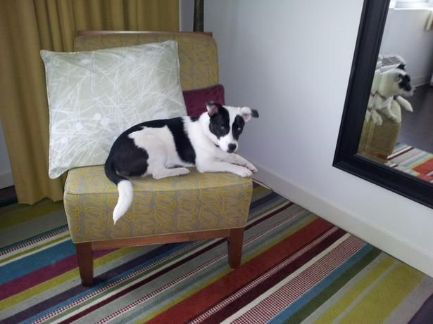 Have You Been To Asheville Nc Hotel Indigo Will Keep Fido Comfortable During Your Next Visit This Dog Friendly City Dogfriendly