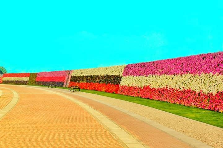 The Dubai Miracle Garden has also previously built the
