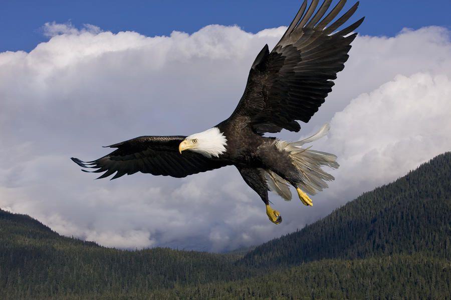 I am an eagles fan but 3