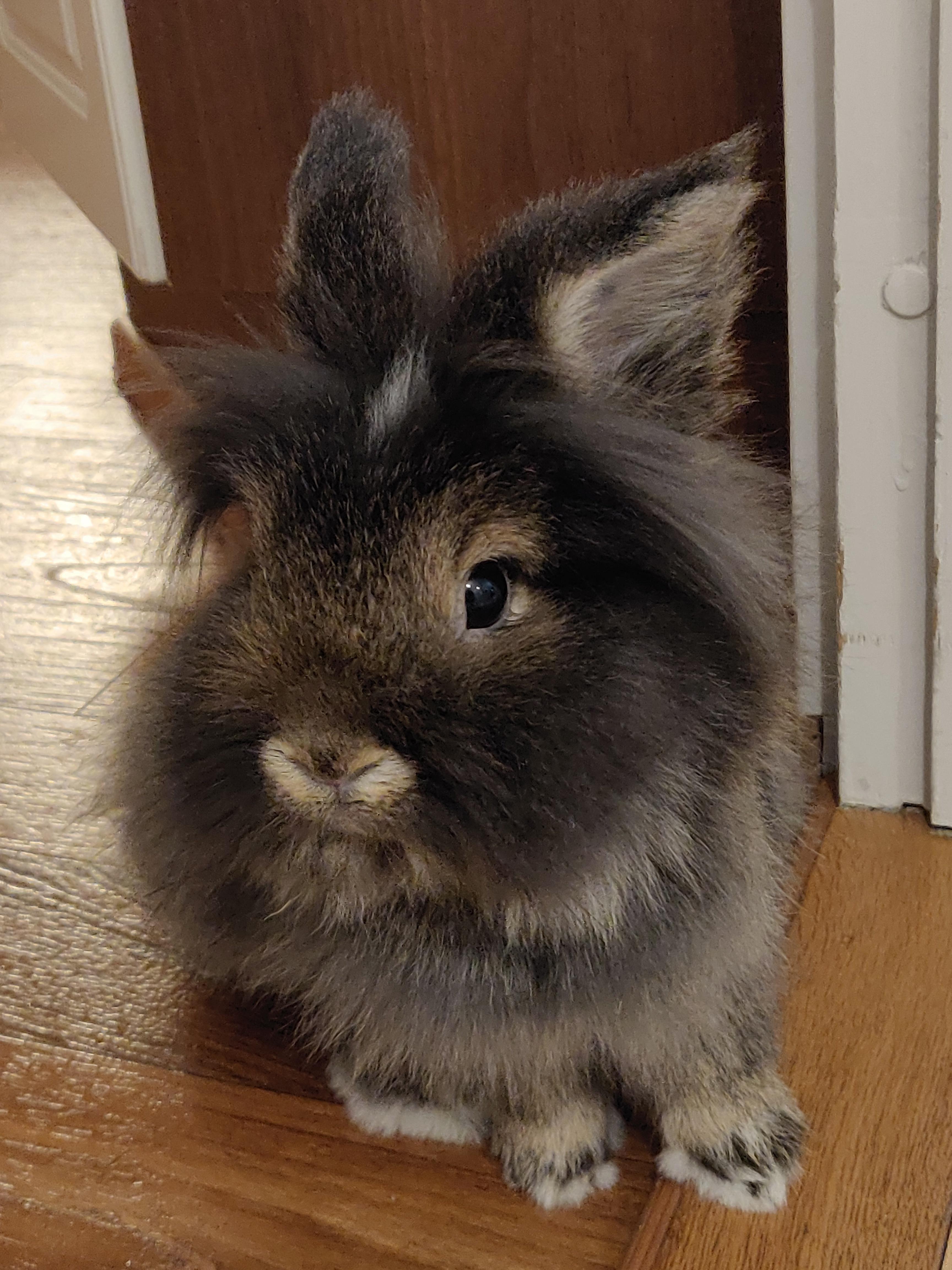 Pin On I Love Rabbits