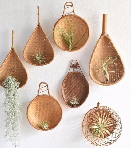 tillandsia air plant wall decor