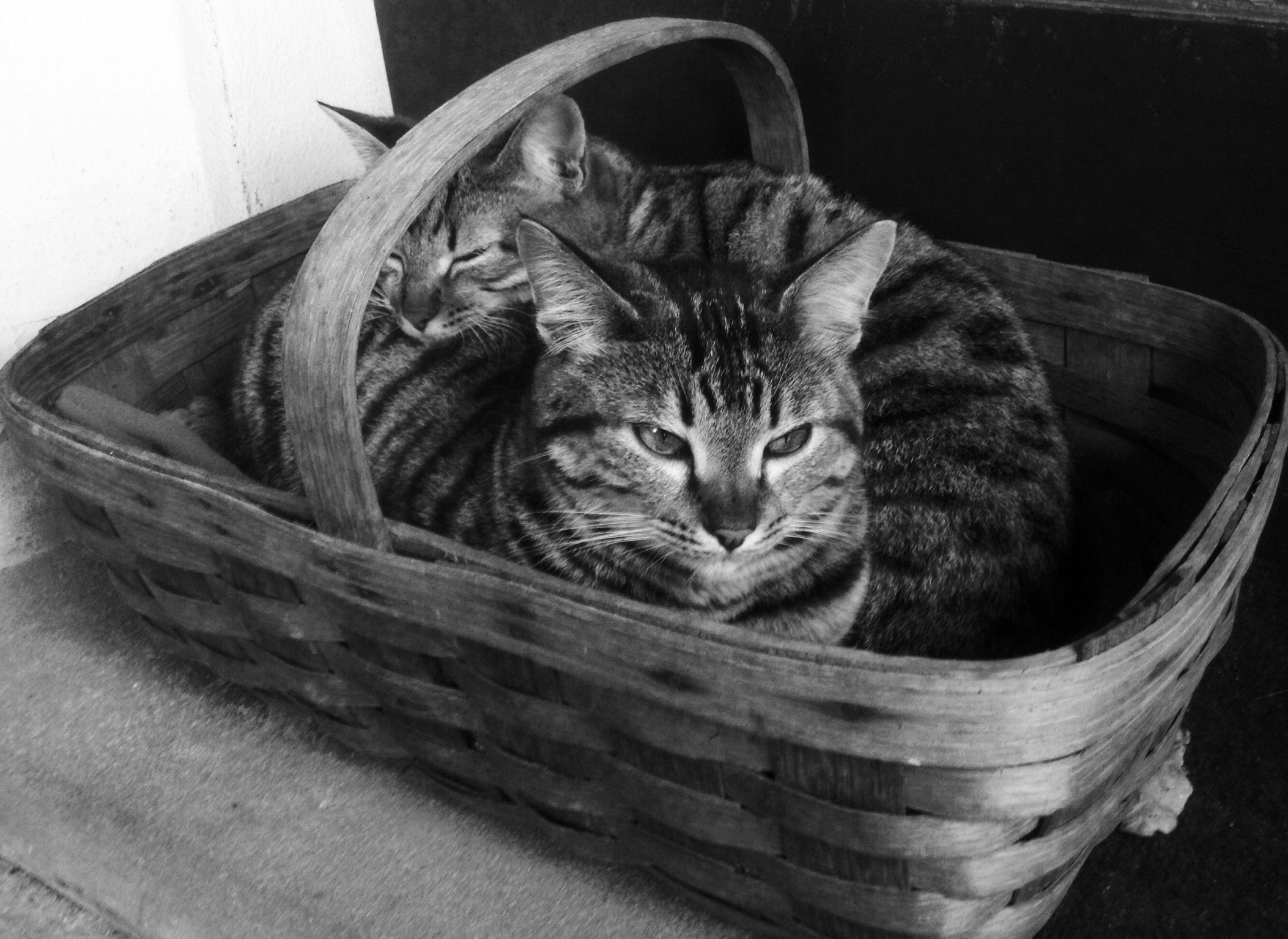 B/N Cats takeaway