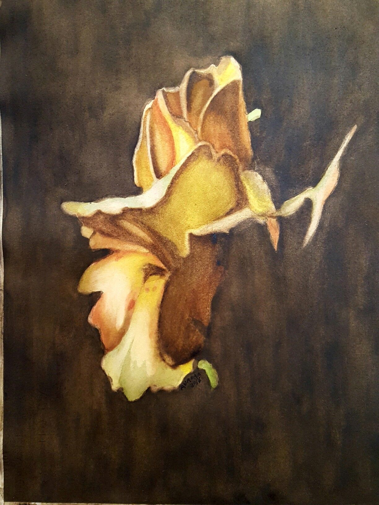 Watercolor painting of a rose.Ujjain