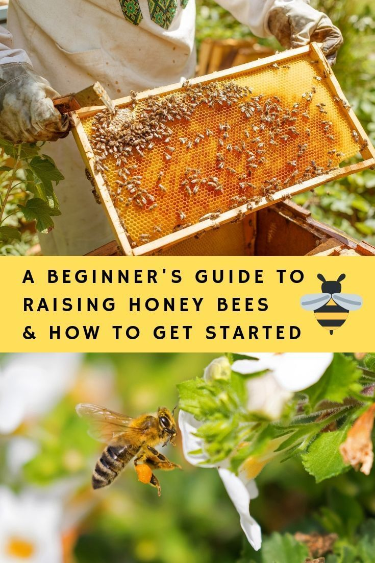 A Beginner's Guide To Raising Honey Bees & How To Get ...