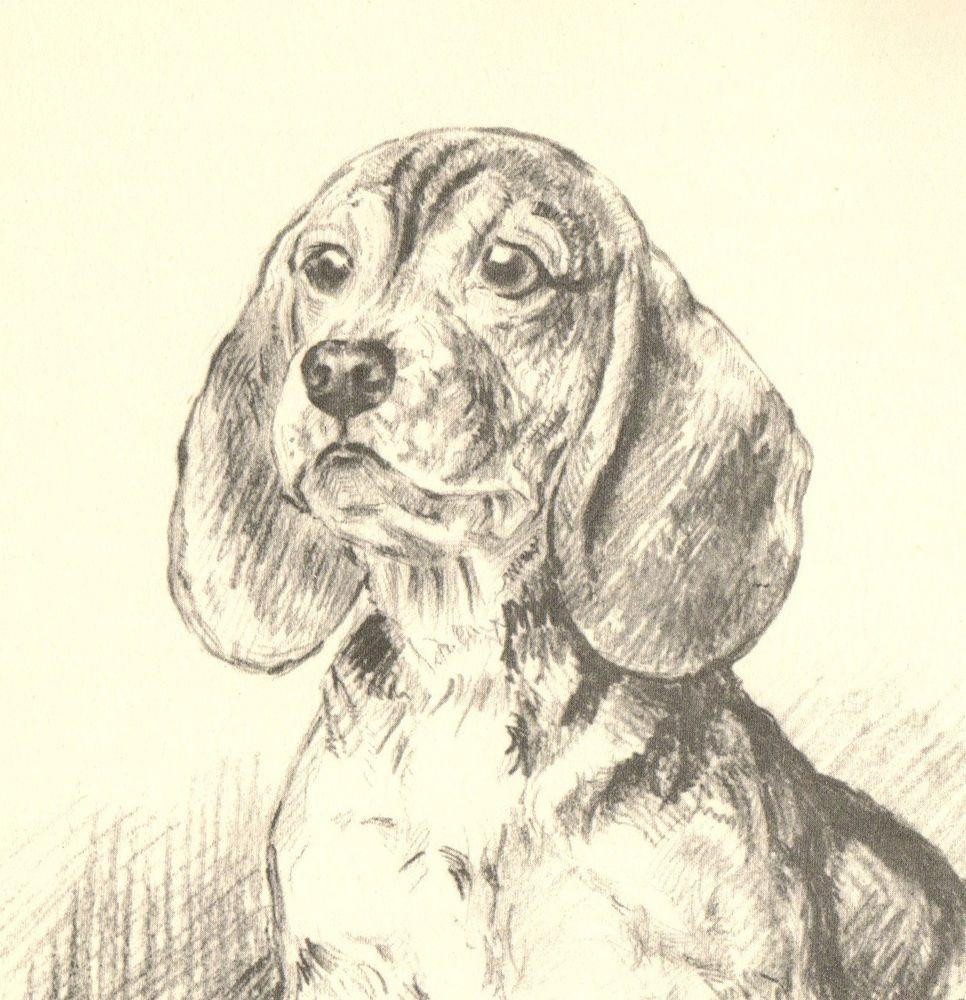 1930s Beautiful Vintage Beagle Print Original Antique Puppy Print