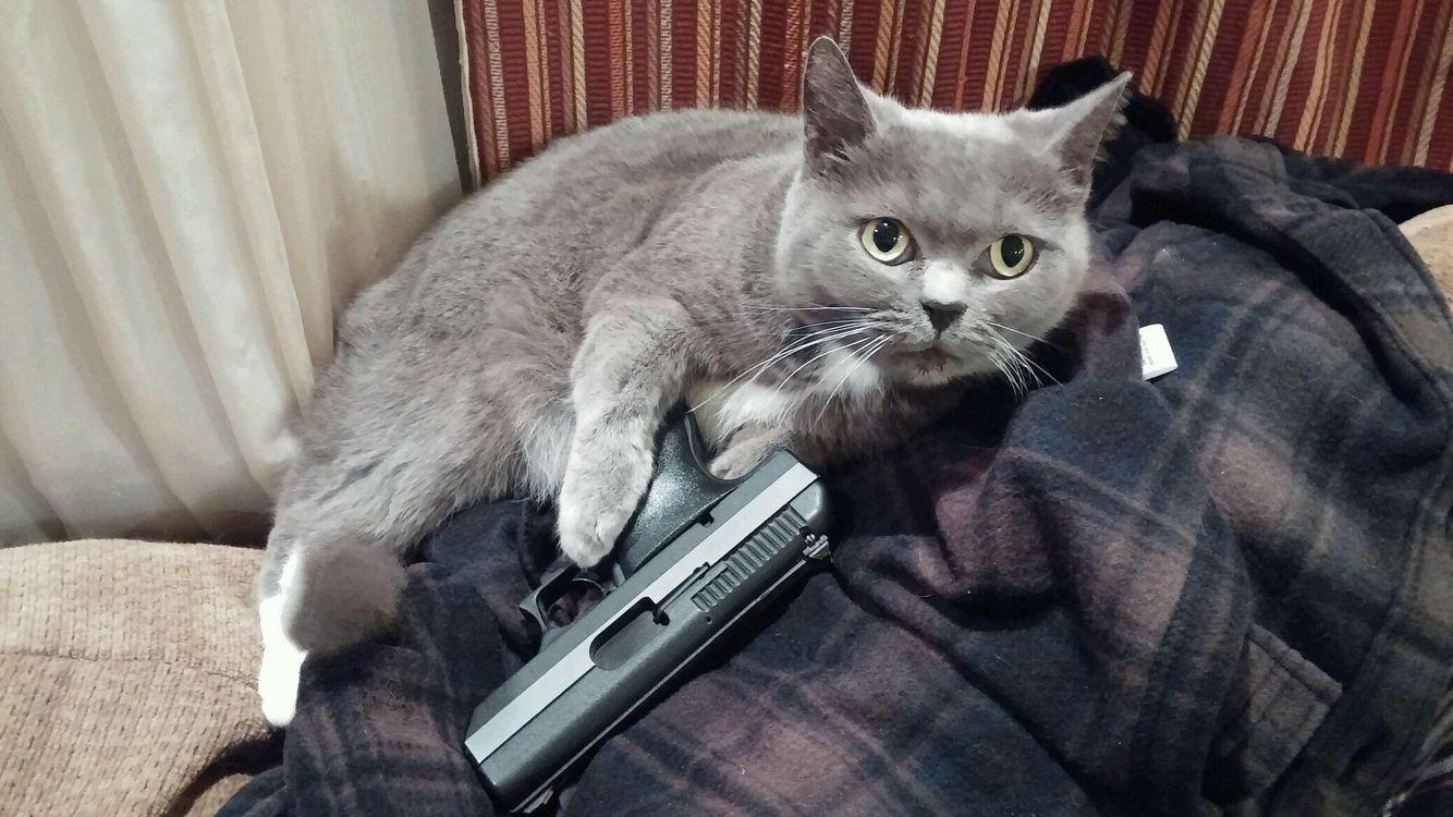 Gangsta Kitty Animals Kitty Cats