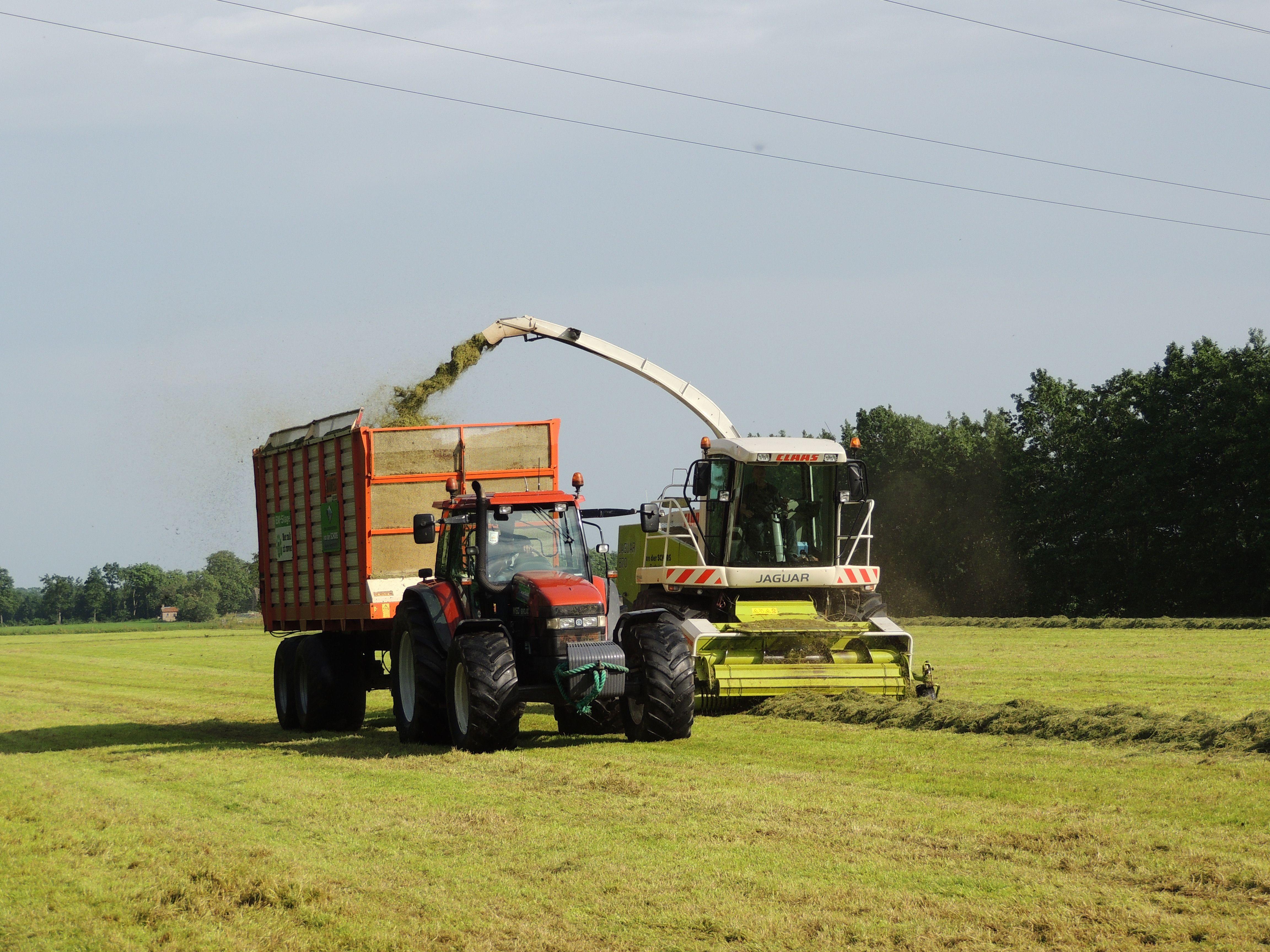 gras maaien en halen. in Friesland bij eastermar.