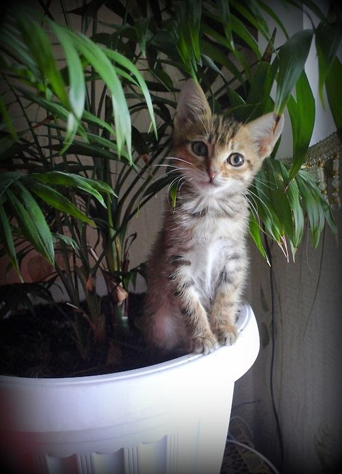 "Hello :) by CosmoZ I love kittens and cats who look so ""earnest""...I wonder in this case what the plant looked like 15 min later??"