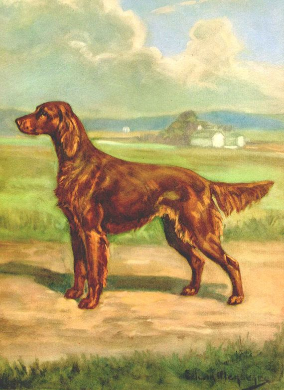Irish Setter Vintage Dog Illustration Edwin Megargee By
