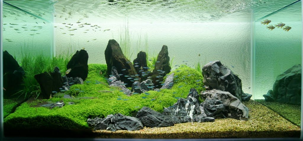 Freshwater Aquarium Design Ideas planted freshwater aquarium setup aquarium design group is a full service custom aquarium design Rocks And Green Neons
