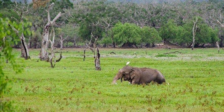 Yala National Park, Sri Lanka, Asia
