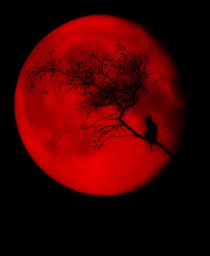 Red Moon rising by fallen0dream on DeviantArt |Red Moon Artwork