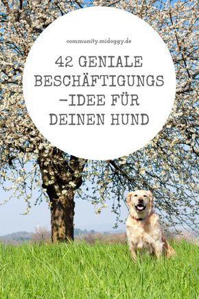 42 Geniale Ideen Wie Du Deinen Hund Beschaftigen Kannst Hunde Hund Beschaftigen Hunde Welpen