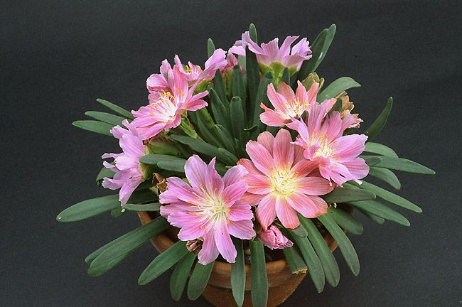 Colorful House Plants For Shade Html on flowers for shade, colorful trees, colorful drought tolerant plants, colorful orchids, colorful plants for shady areas, flowers that thrive in shade, colorful container plants, fruit trees for shade, colorful vegetables, colorful foliage, colorful potted plants, colorful plants for landscaping, colorful raindrops, palm trees for shade, colorful tropical plants, colorful succulents, colorful perennials, colorful florida plants, colorful air plants, colorful evergreen plants,
