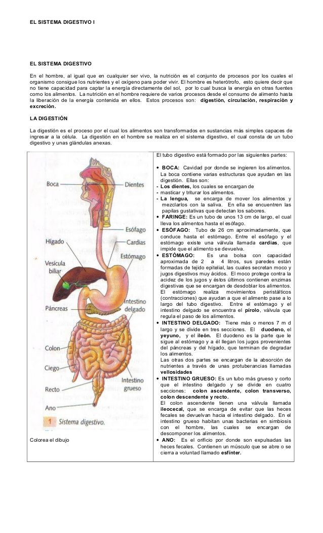 El Sistema Digestivo I El Sistema Digestivo En El Hombre Al Igual Que En Cualquier Ser Viv Sistema Digestivo Humano Sistema Digestivo Aparato Digestivo Humano