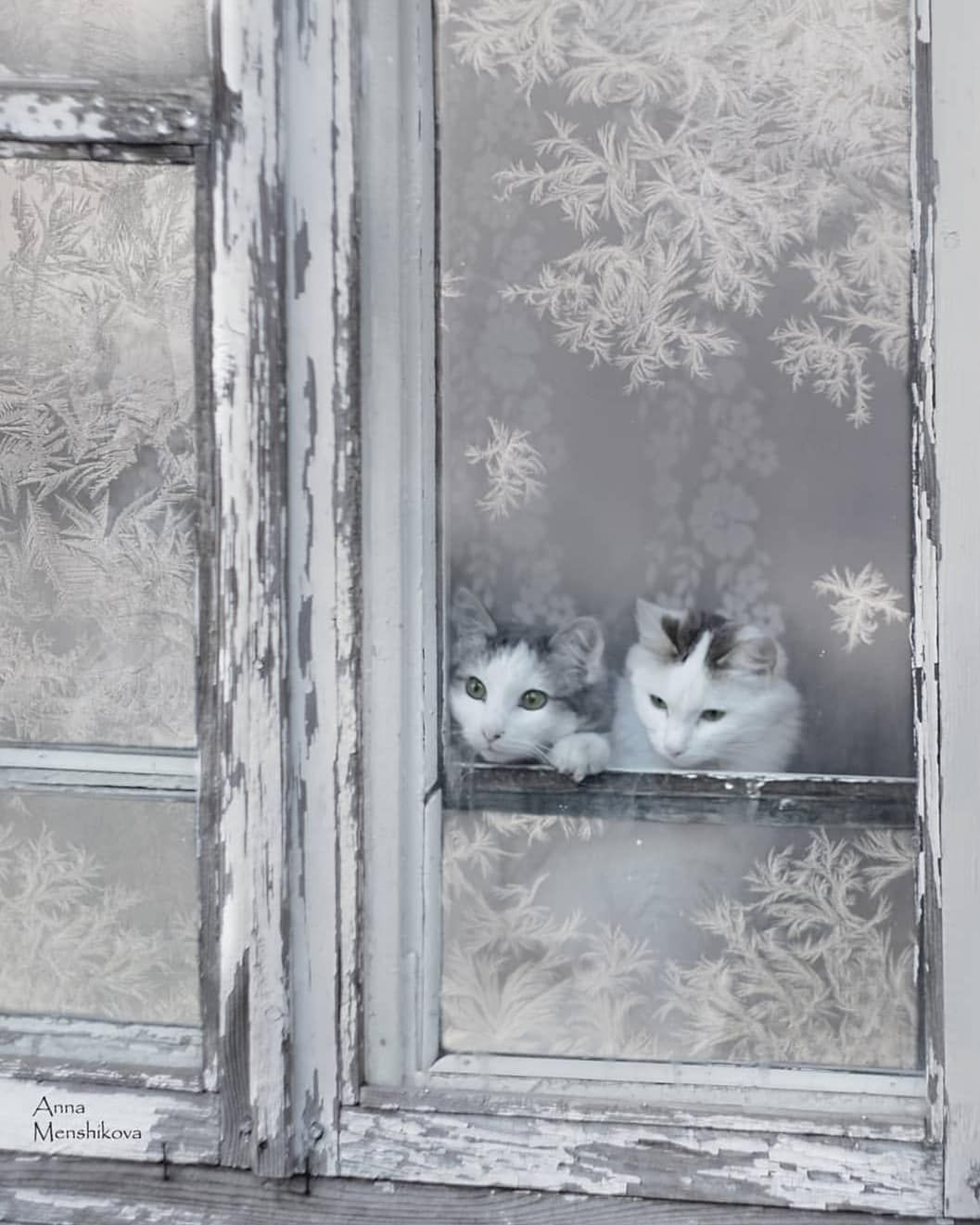 Pin on Winter Wonders
