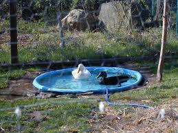 duck pond ideas | Duck pond, Ponds backyard, Duck pens