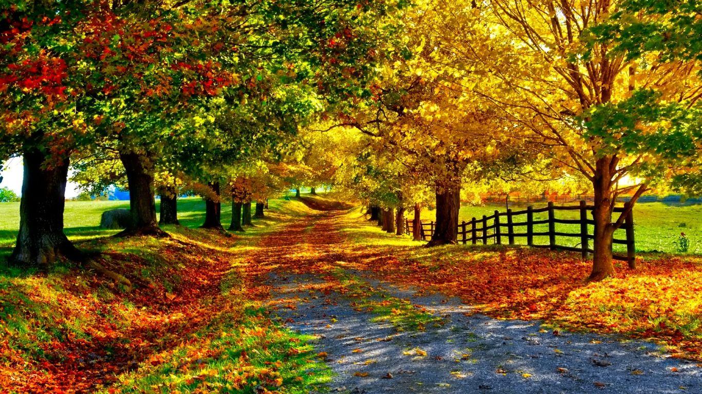 Autumn Path Fonds D Ecran Arrieres Plan 1366x768 Id 437107 Paysage Automne Paysage Photos Paysage