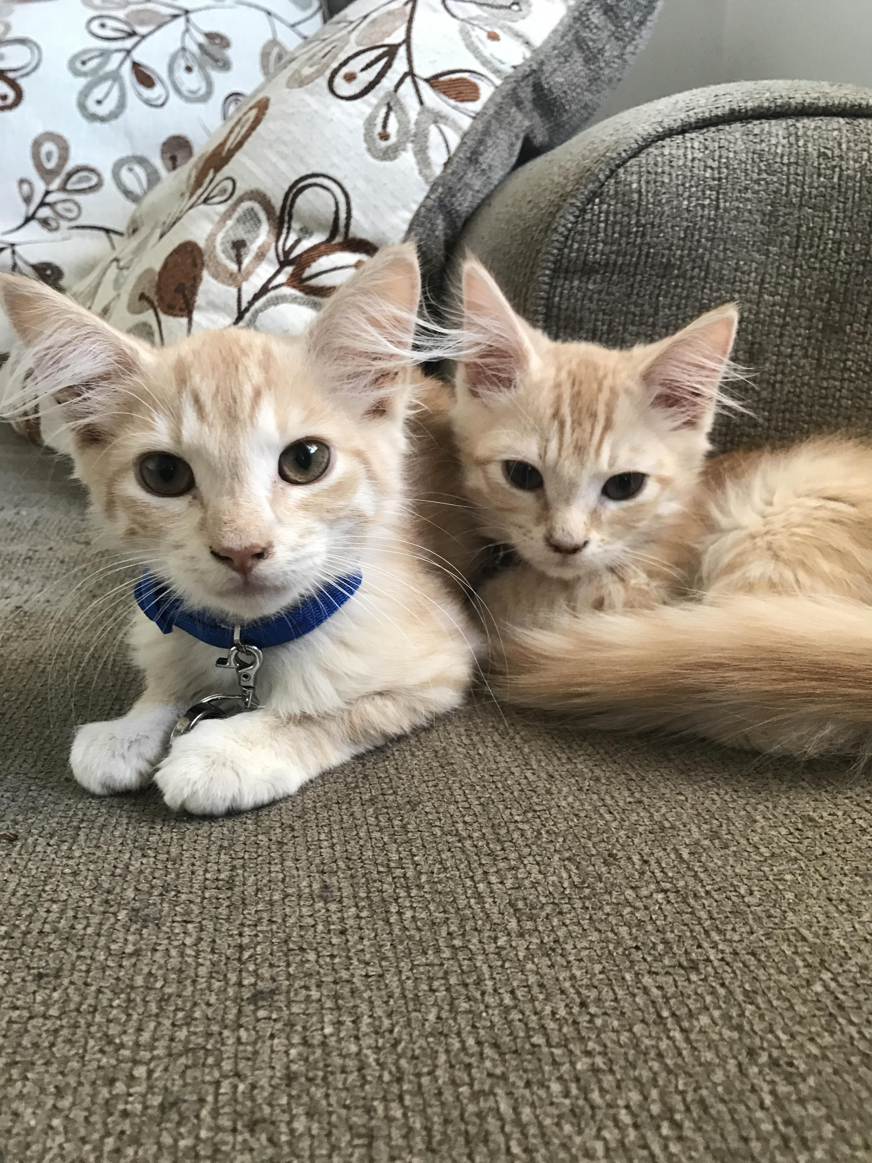 Reddit meet Moose and Nibbler. Rescued from the Pensacola