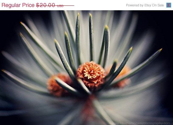ON SALE 50% off CLEARANCE Abstract Macro pine by HConwayPhotography, $10.00