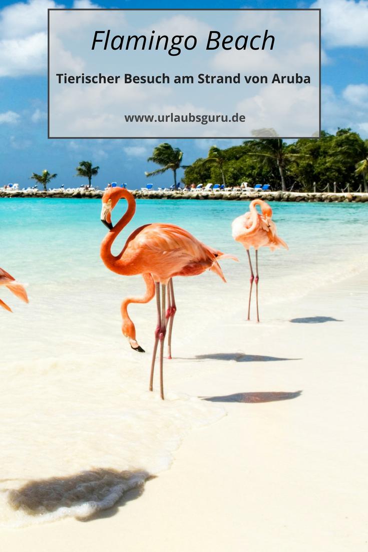 Flamingo Beach Aruba it couldnu0027t get