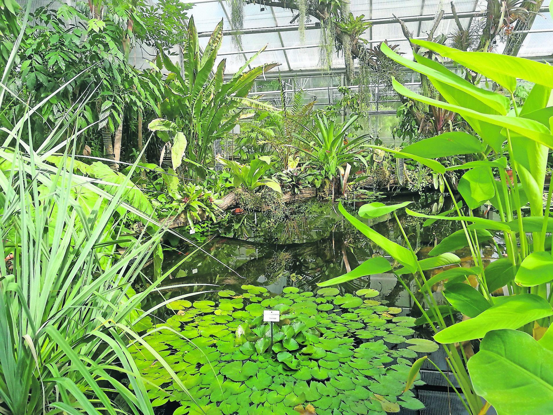 Botanischer Garten Dresden In 2021