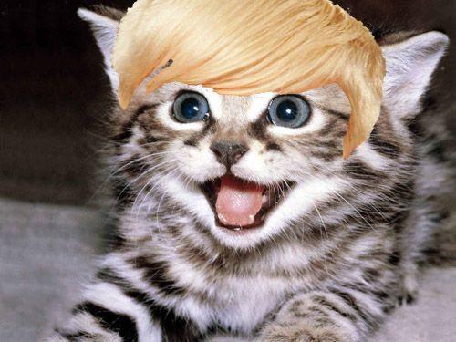 Kittens With Miley Cyrus Hair | GeekNation