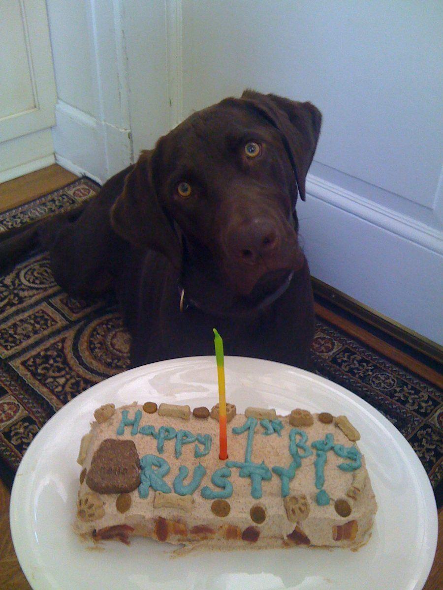 Dog Birthday Cake Recipe Check Dog Birthday And Dog