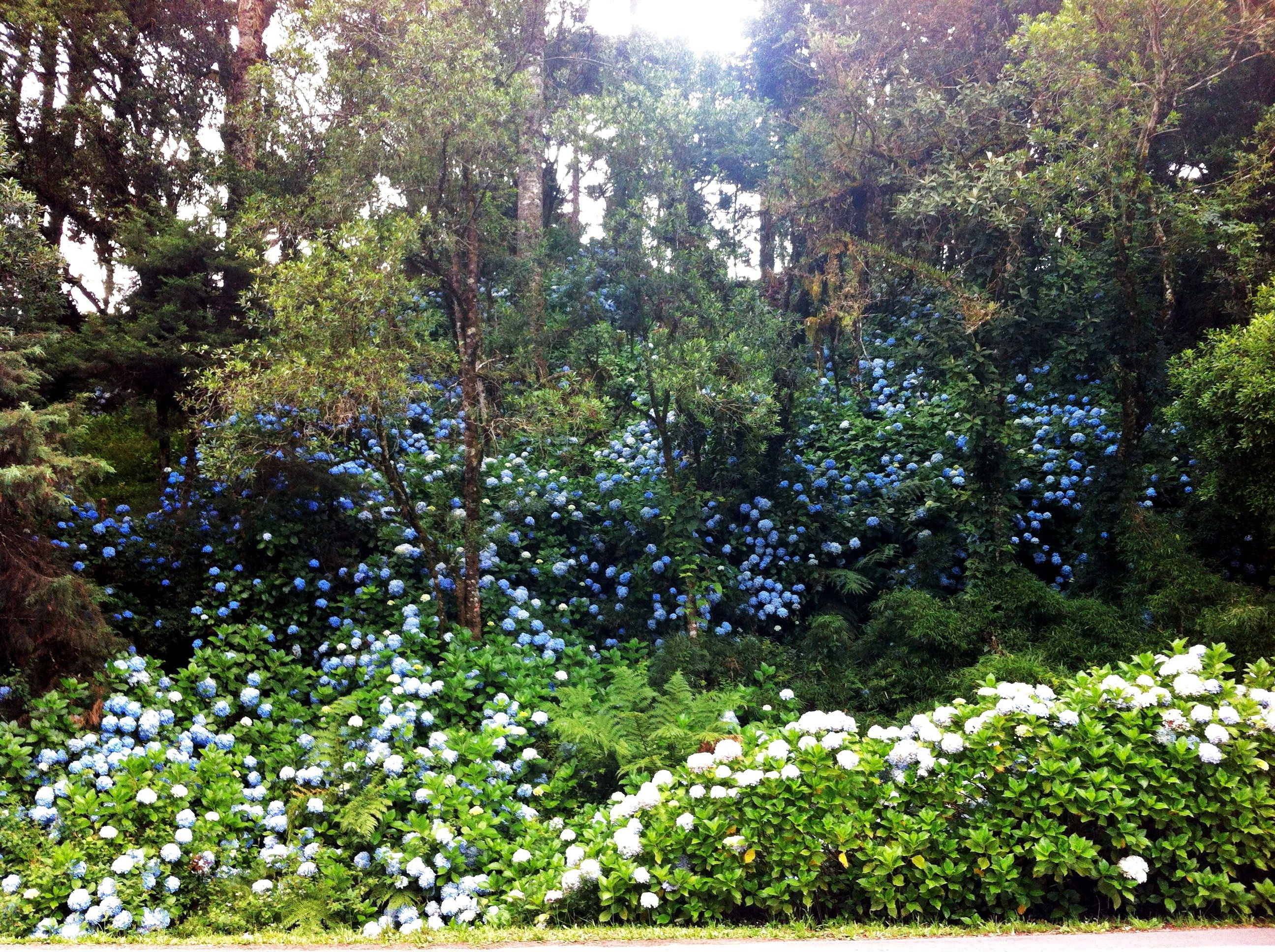 How many Fairies can you see? Gramado - RS